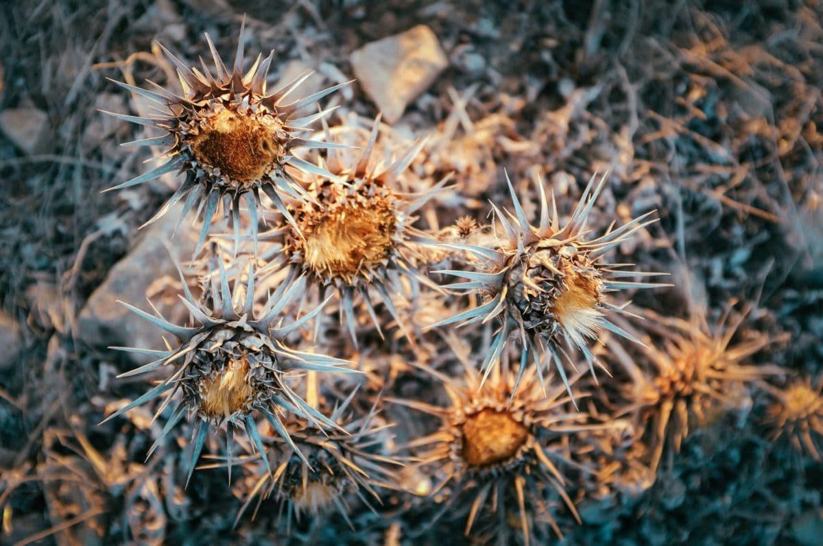 priroda, suha, oštra, biljka, biljka, pustinja, vanjski, biljka