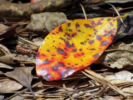 nature, dry leaf, autumn, outdoor, brown, ground