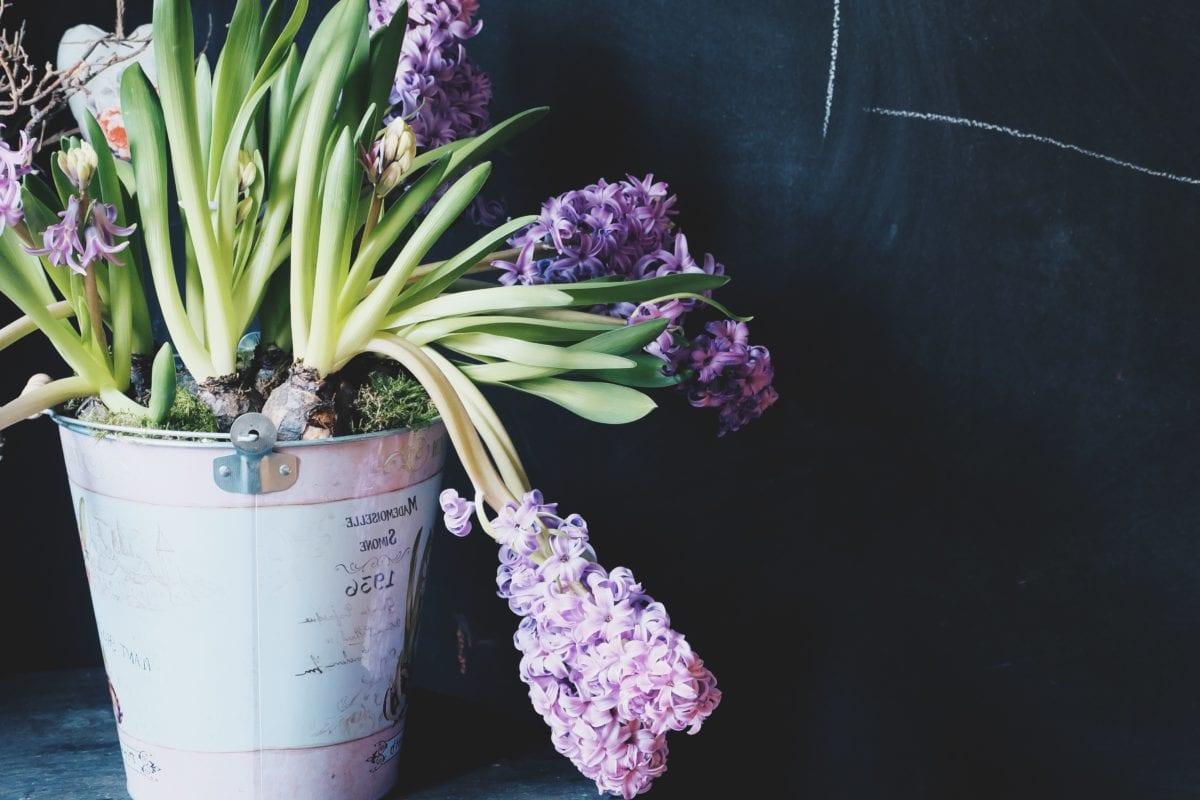 flower, nature, object, still life, shadow, flower pot, plant