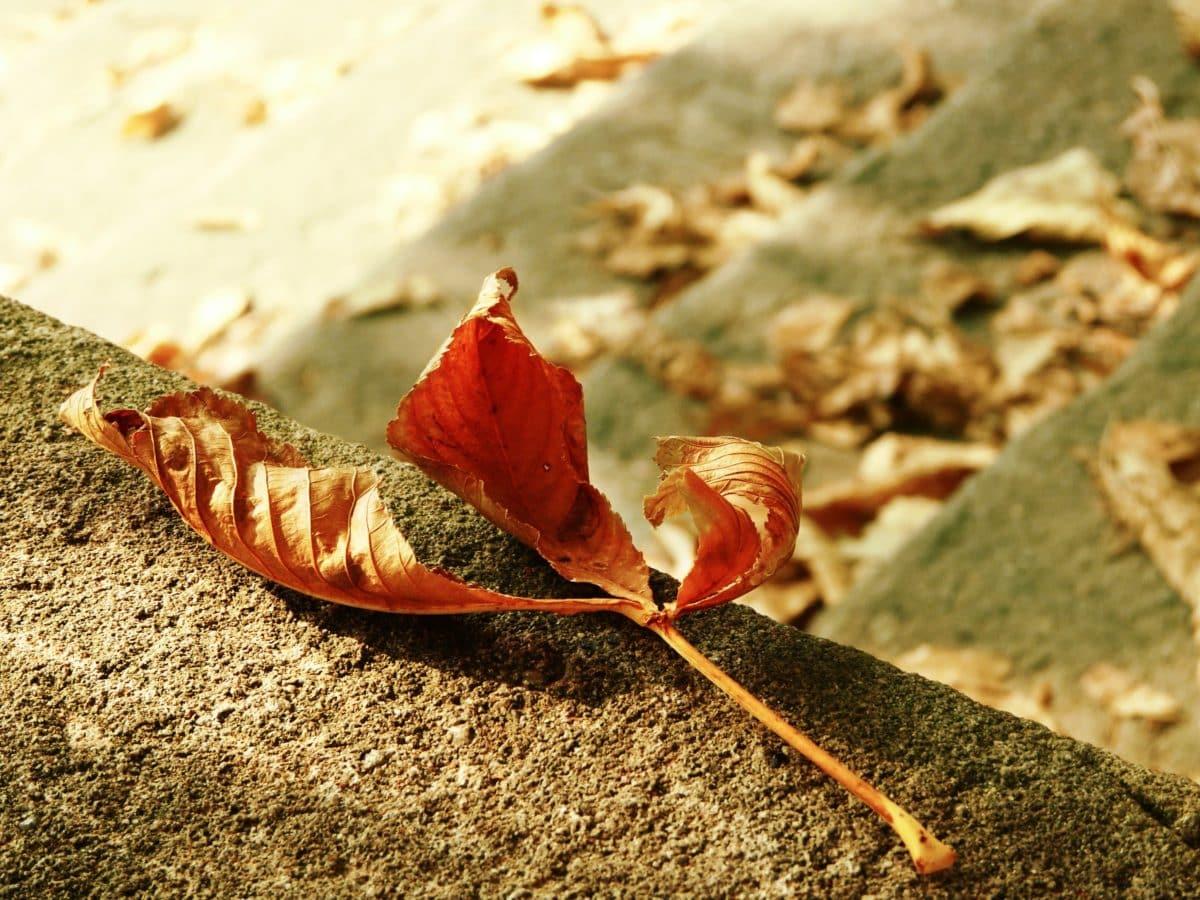 nature, feuille brune, sol, extérieur, béton, automne