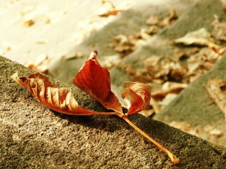 nature, brown leaf, ground, outdoor, concrete, autumn