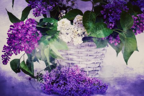 photomontage, decoration, lilac, garden, wicker basket, summer, petal, flower