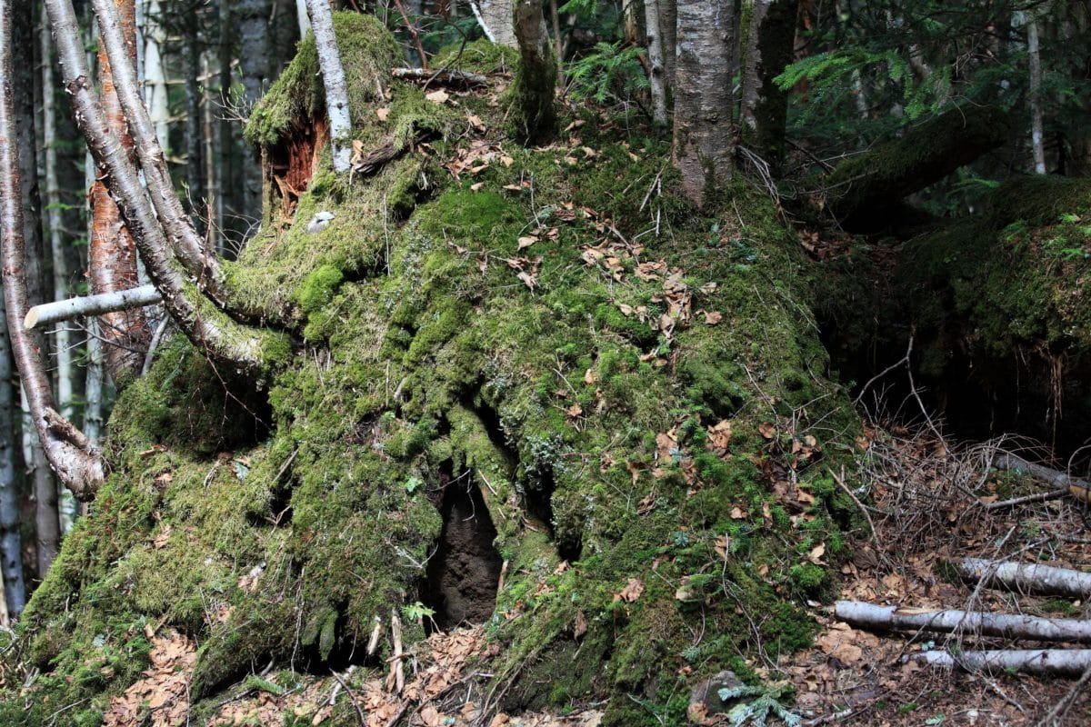 musgo, madera, hoja, naturaleza, ambiente, paisaje, árbol, bosque