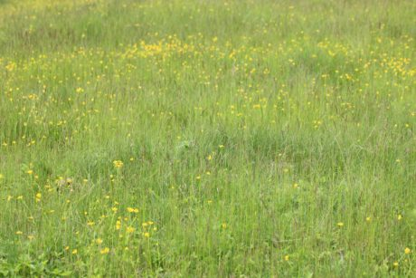 summer, nature, flower, field, grassland, green grass, herb, plant