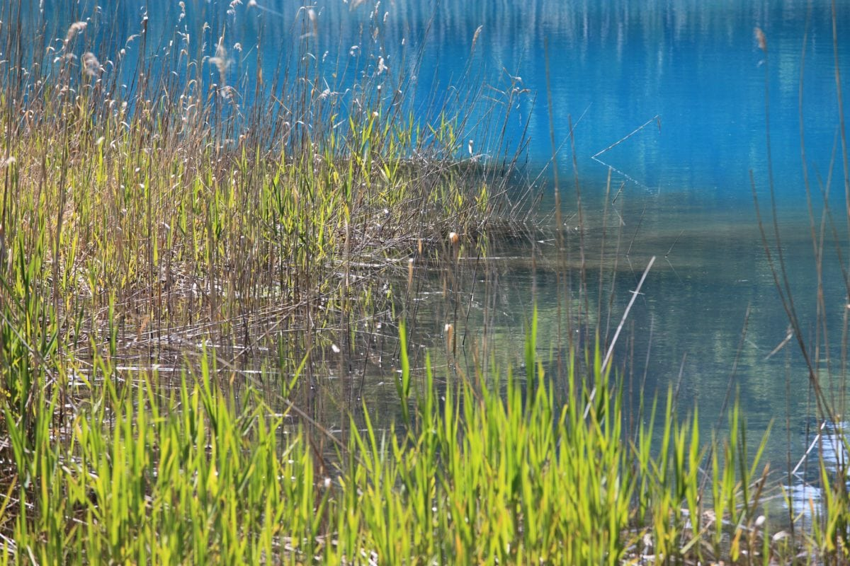 swamp, environment, water, reflection, lake, grass, nature, landscape