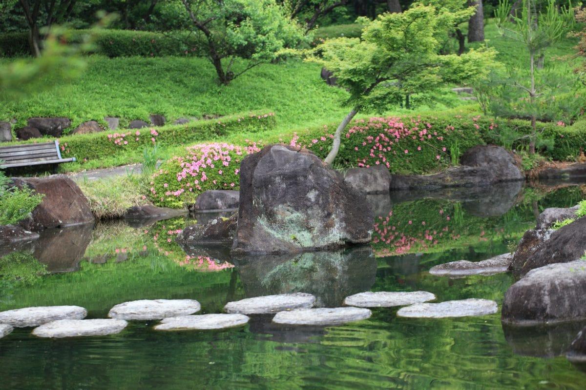 γρασίδι, φύση, καλοκαίρι, τοπίο, πέτρα, νερό, Κήπος, δέντρο