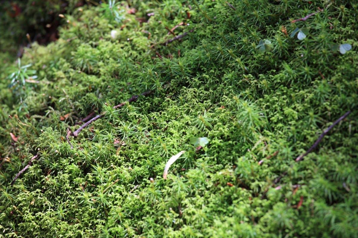 green grass, moss, environment, tree, leaf, summer, nature, garden, plant