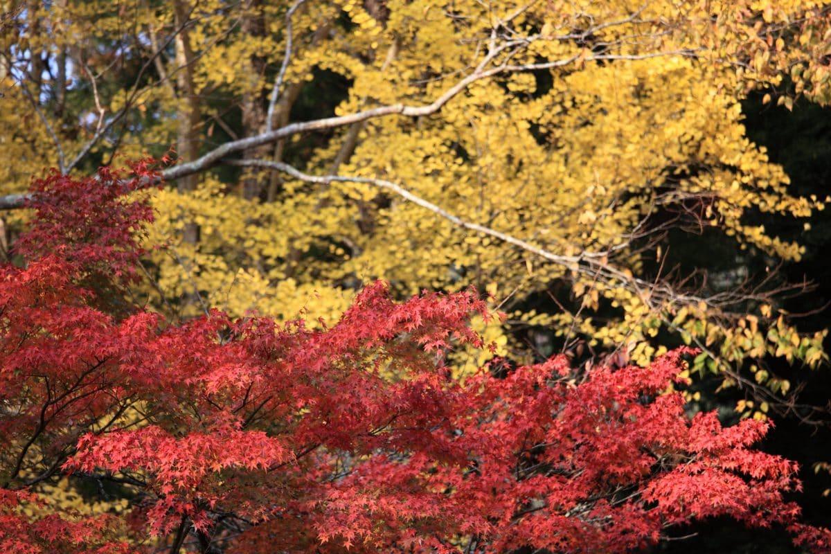 branch, wood, leaf, nature, tree, landscape, autumn, plant