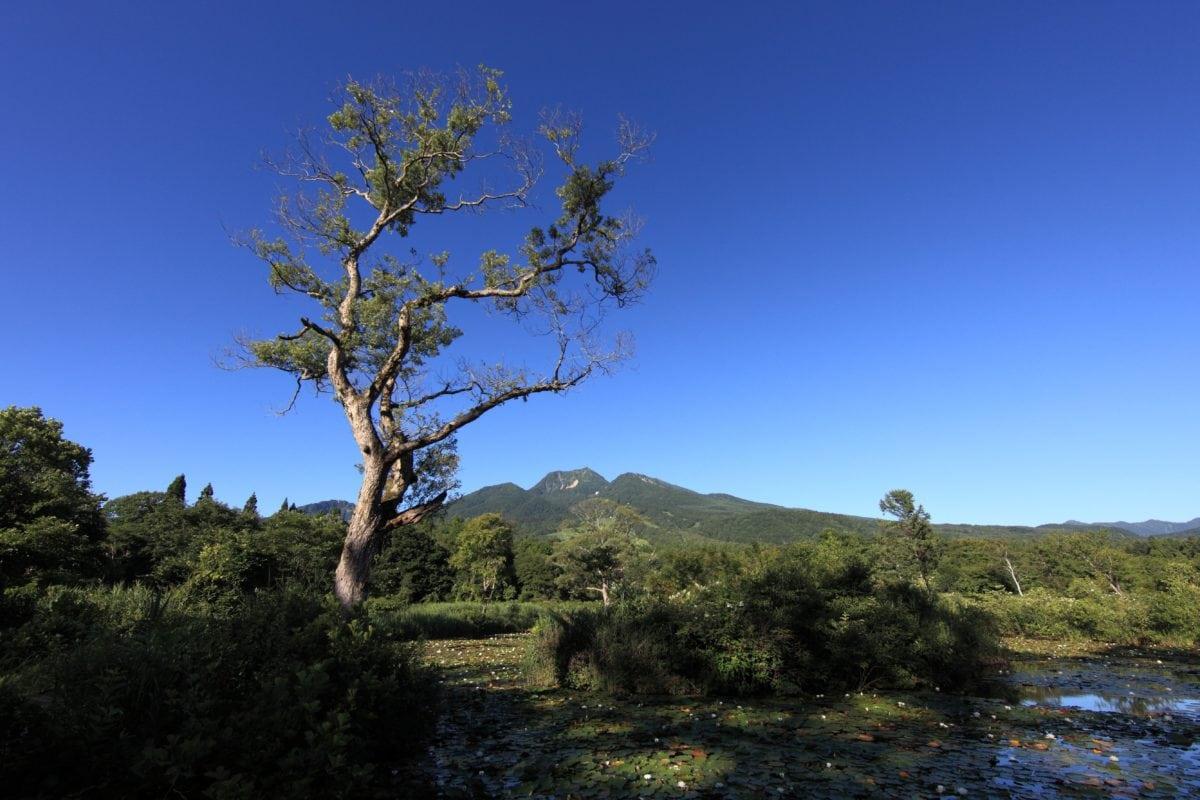 modrá obloha, příroda, strom, krajina, tráva, rostlina, venkovní
