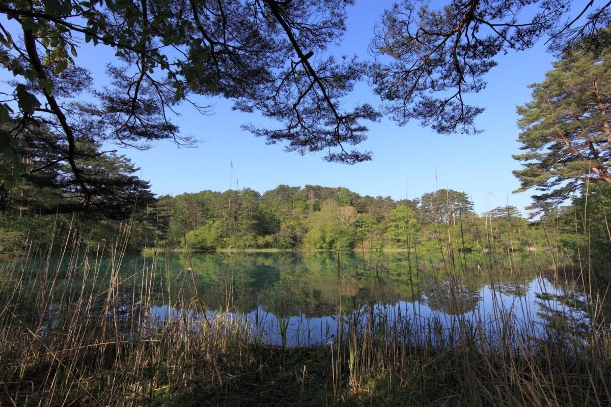 træ, vand, træ, natur, refleksion, himmel, landskab, sø