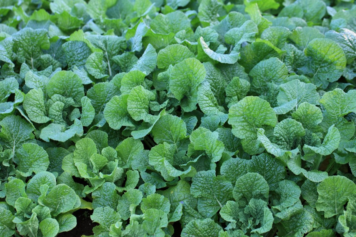 Landwirtschaft, Kräuter, Blatt, Gewürze, Gemüse, Natur, Garten, Lebensmittel