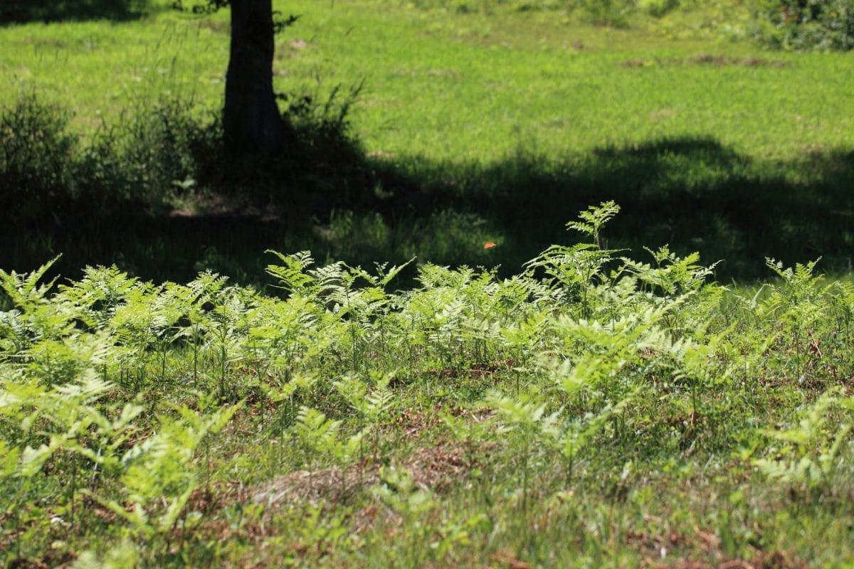 fern, green grass, leaf, wood, environment, tree, landscape, nature, plant