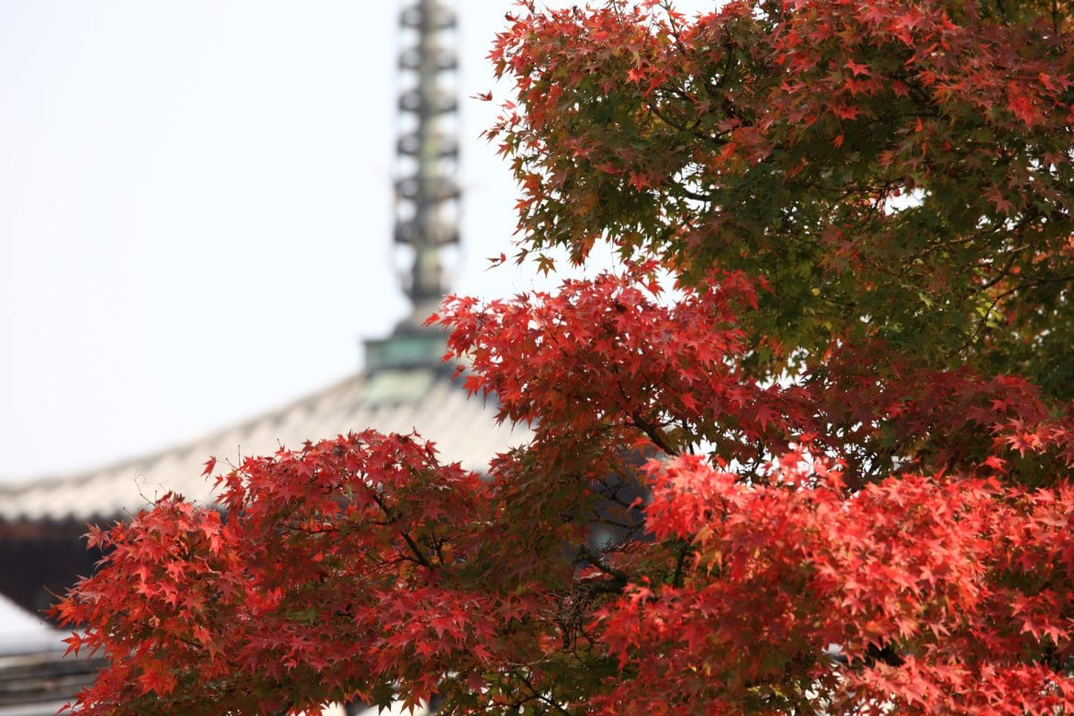 tree, nature, leaf, plant, autumn, sky, outdoor, tower, branch