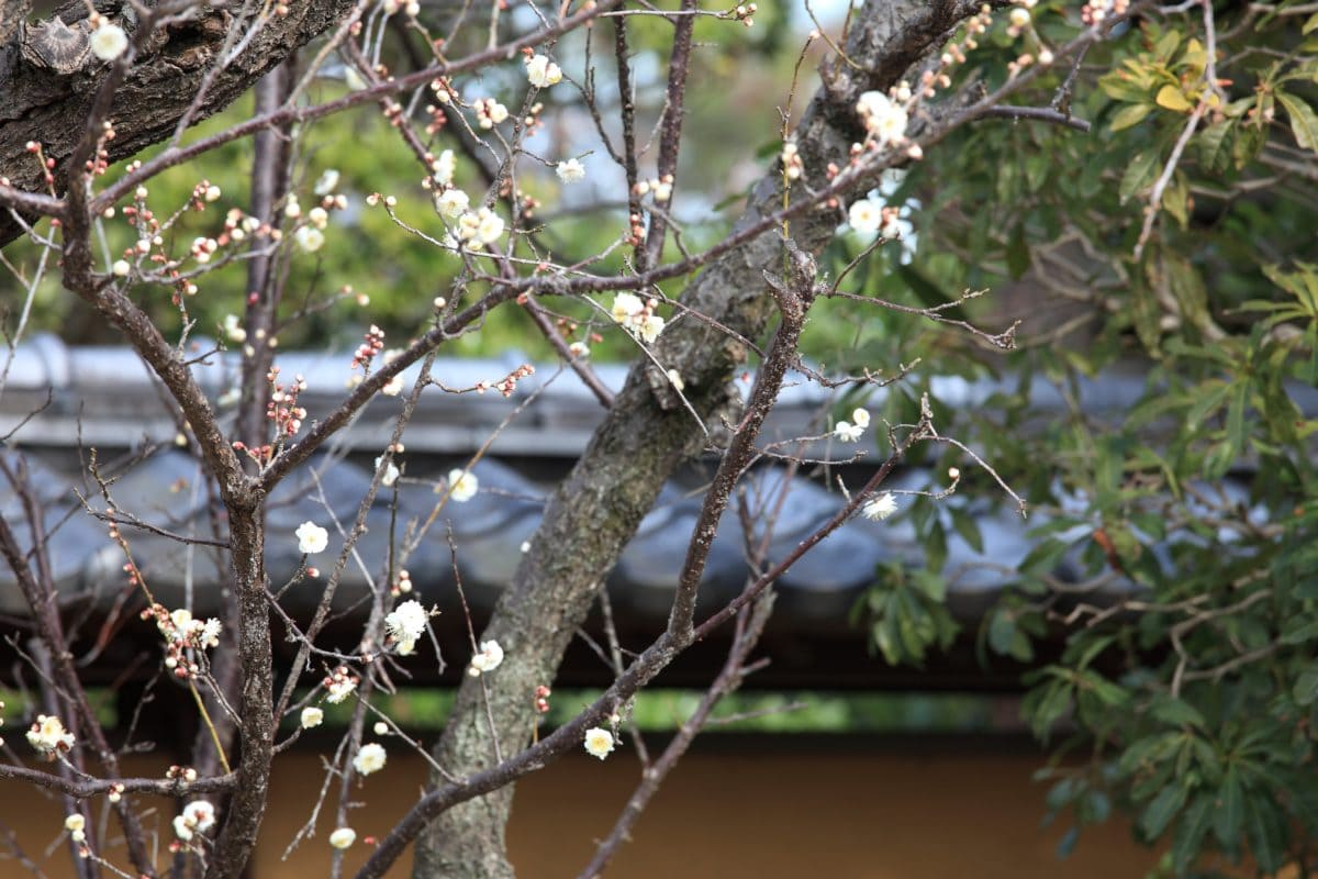 strom, zahrada, příroda, květina, větev, bříza, venkovní