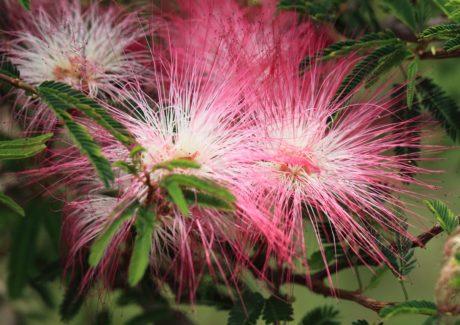 nature, fleur exotique, tropique, plante, arbre