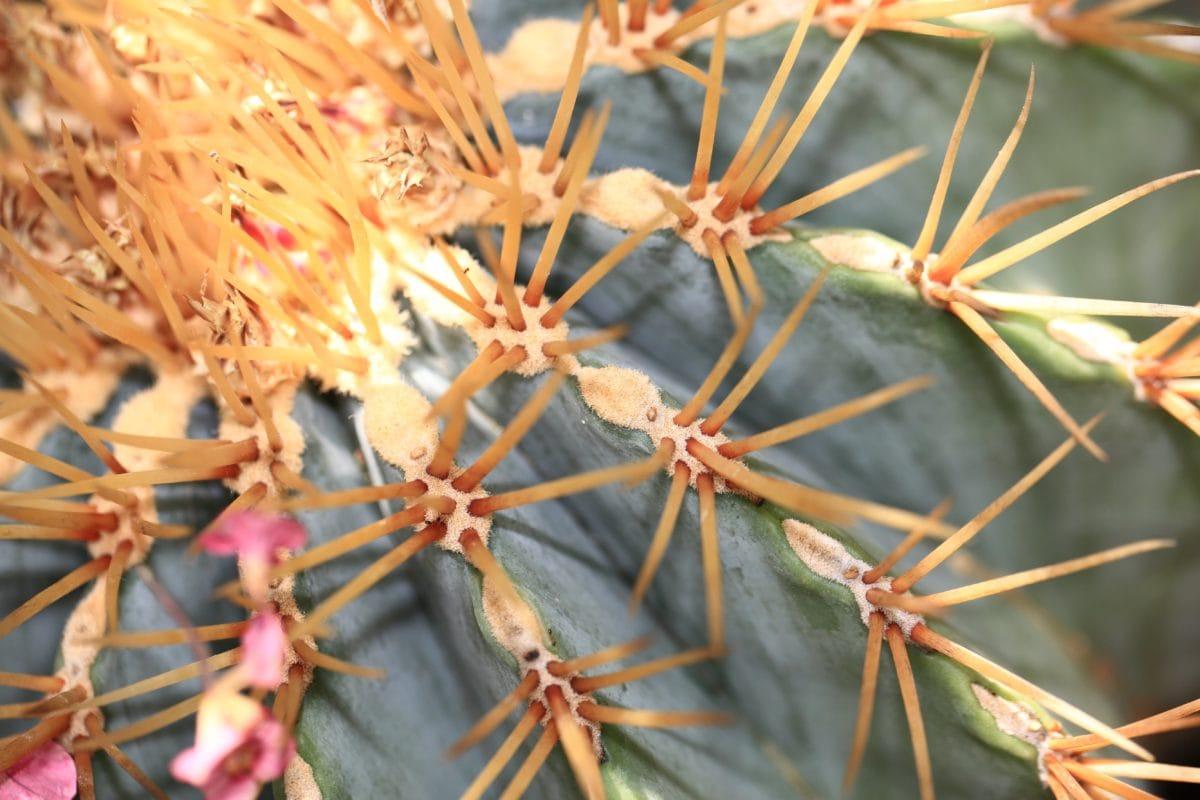 éles, virág, természet, kaktusz, fa, növény, tüske