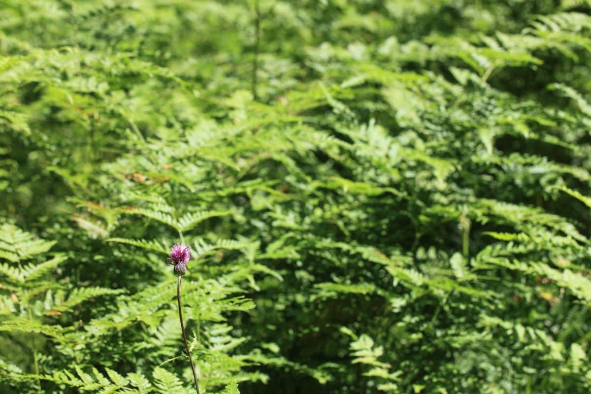 wood, environment, fern, summer, leaf, nature, plant, herb, tree