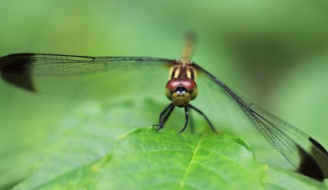 wildlife, insect, nature, dragonfly, head, detail, animal, arthropod, bug