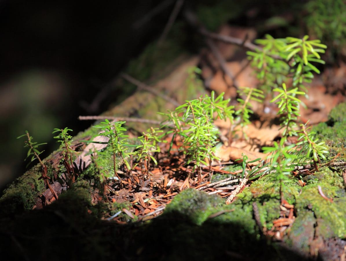 fern, leaf, tree, environment, nature, moss, wood, herb, plant