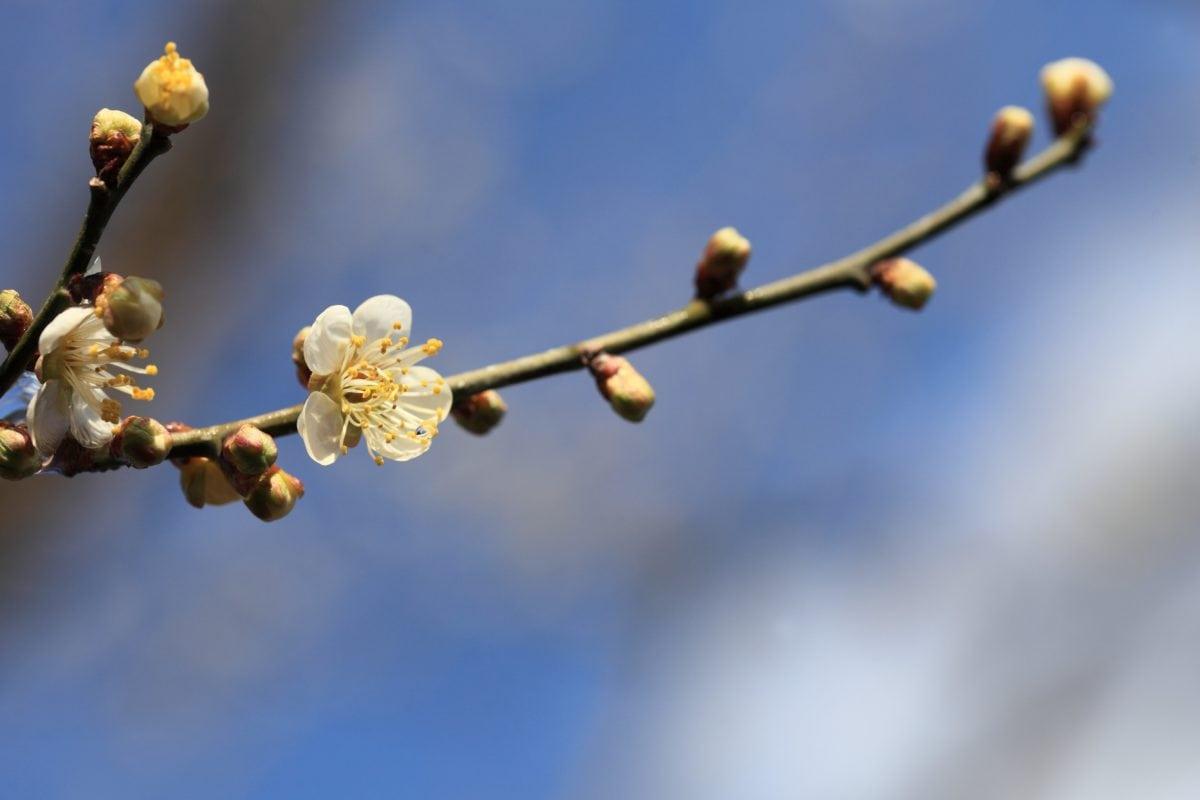 branch, flower, tree, nature, plant, blossom, spring time, blue sky