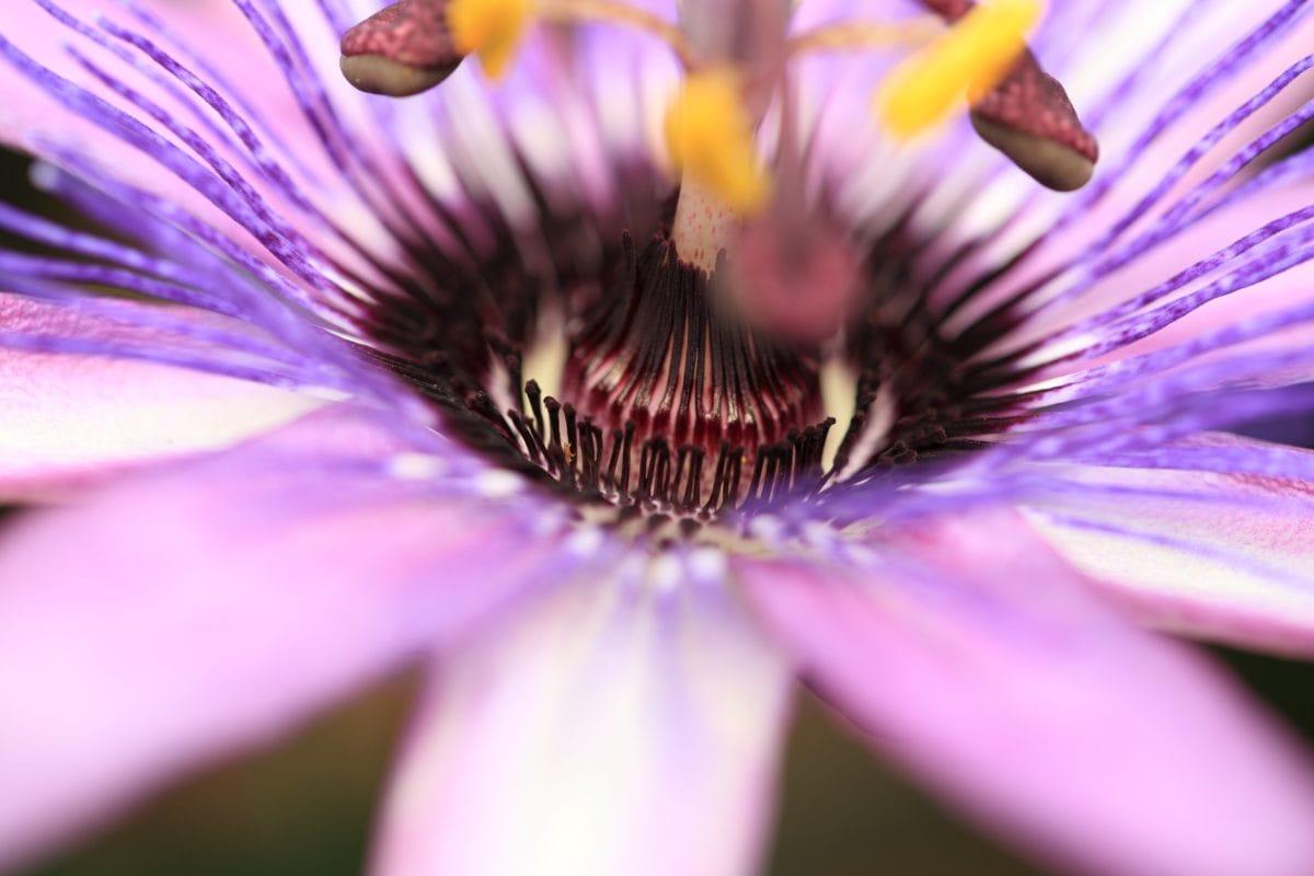 natura, gradina, flori exotice, vara, frumos, Herb, detaliu vegetaţie