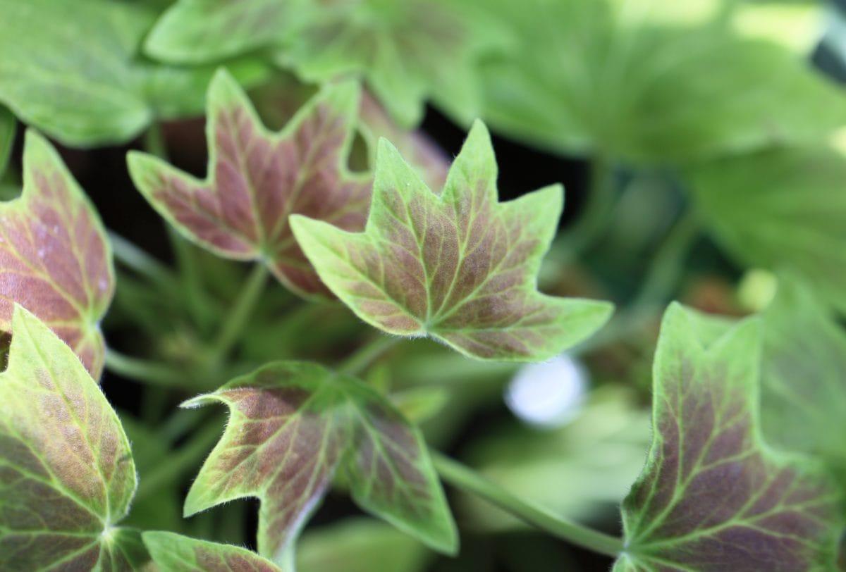 garden, green leaf, environment, nature, herb, plant