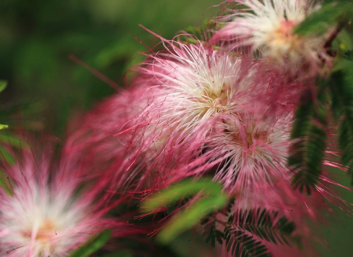 vrt, tropski cvijet, lijepa, priroda, ljeto, list, stablo, biljka