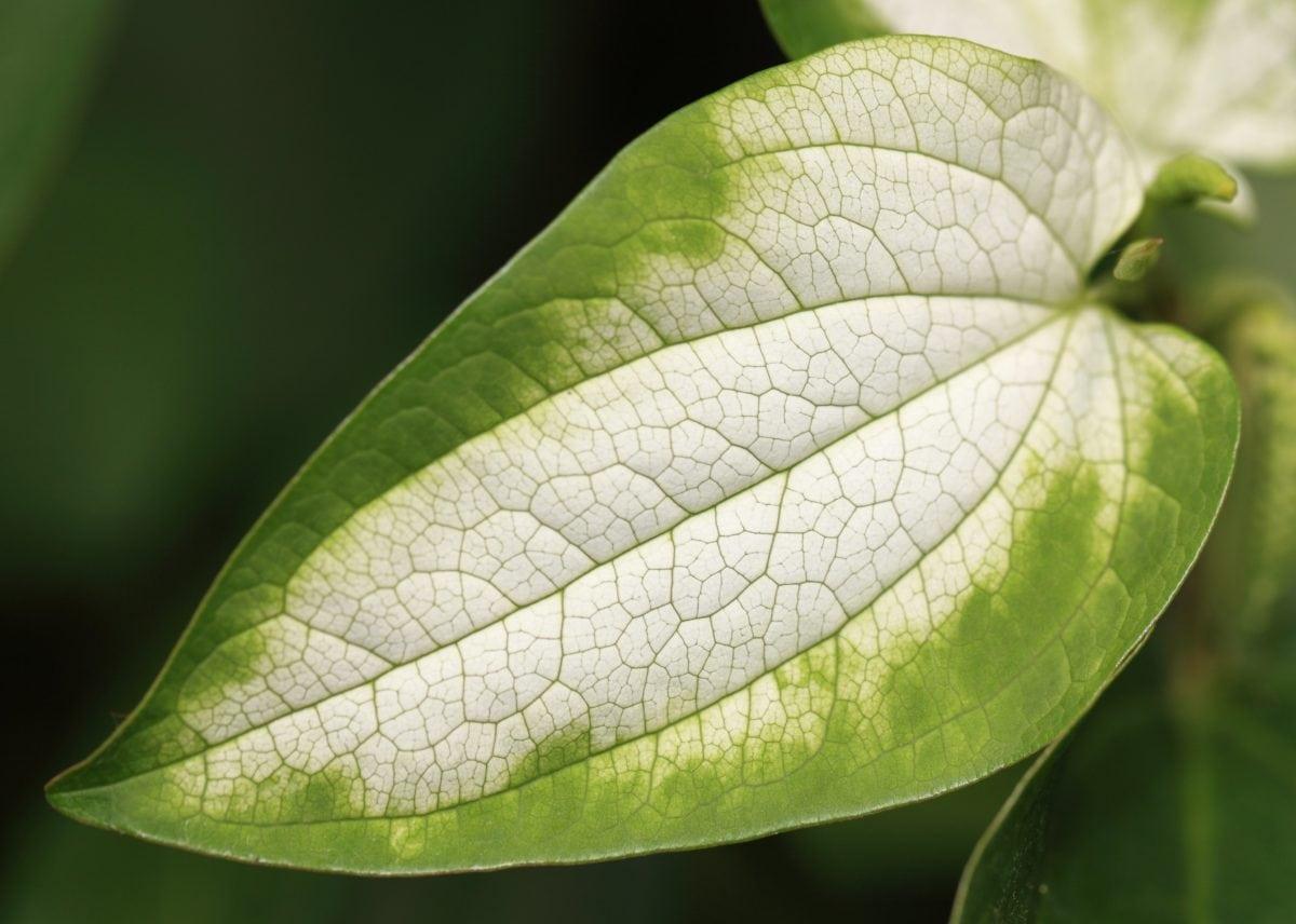 nature, summer, green  leaf, plant, ecology, herb, garden, foliage