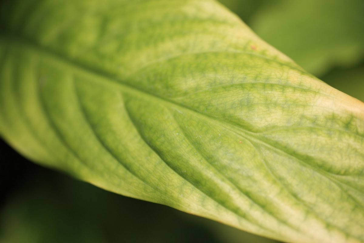 feuille verte, nature, pluie, herbe, plante, vert