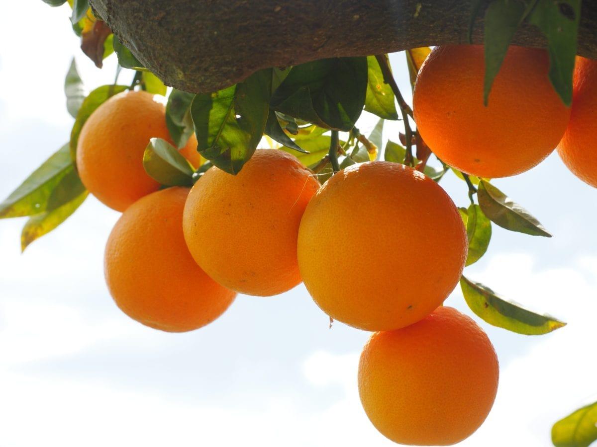 juice, frukt, mat, löv, nutrition, citrus, mandarin, Tangerine, blå himmel