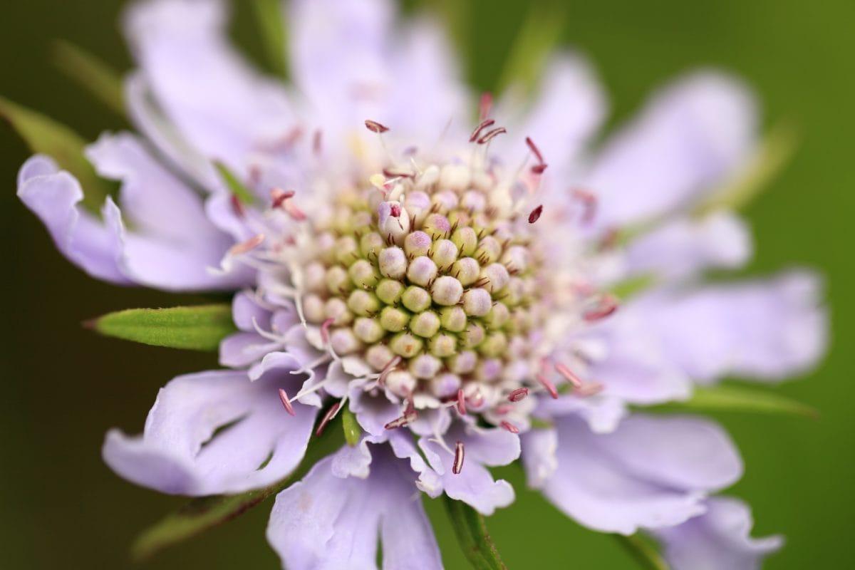 กลีบดอก, ฤดูร้อน, ใบ, ธรรมชาติ, ดอกไม้ที่แปลกใหม่