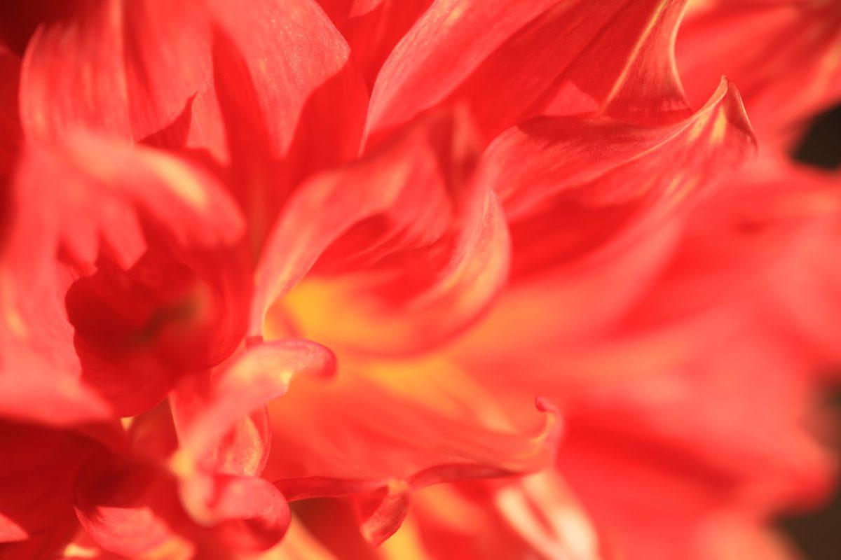 nyár, trópusi virág, természet, gyönyörű, rózsaszín, szirom, növény