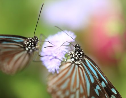 wildlife, nature, animal, summer, colorful butterfly, insect, moth