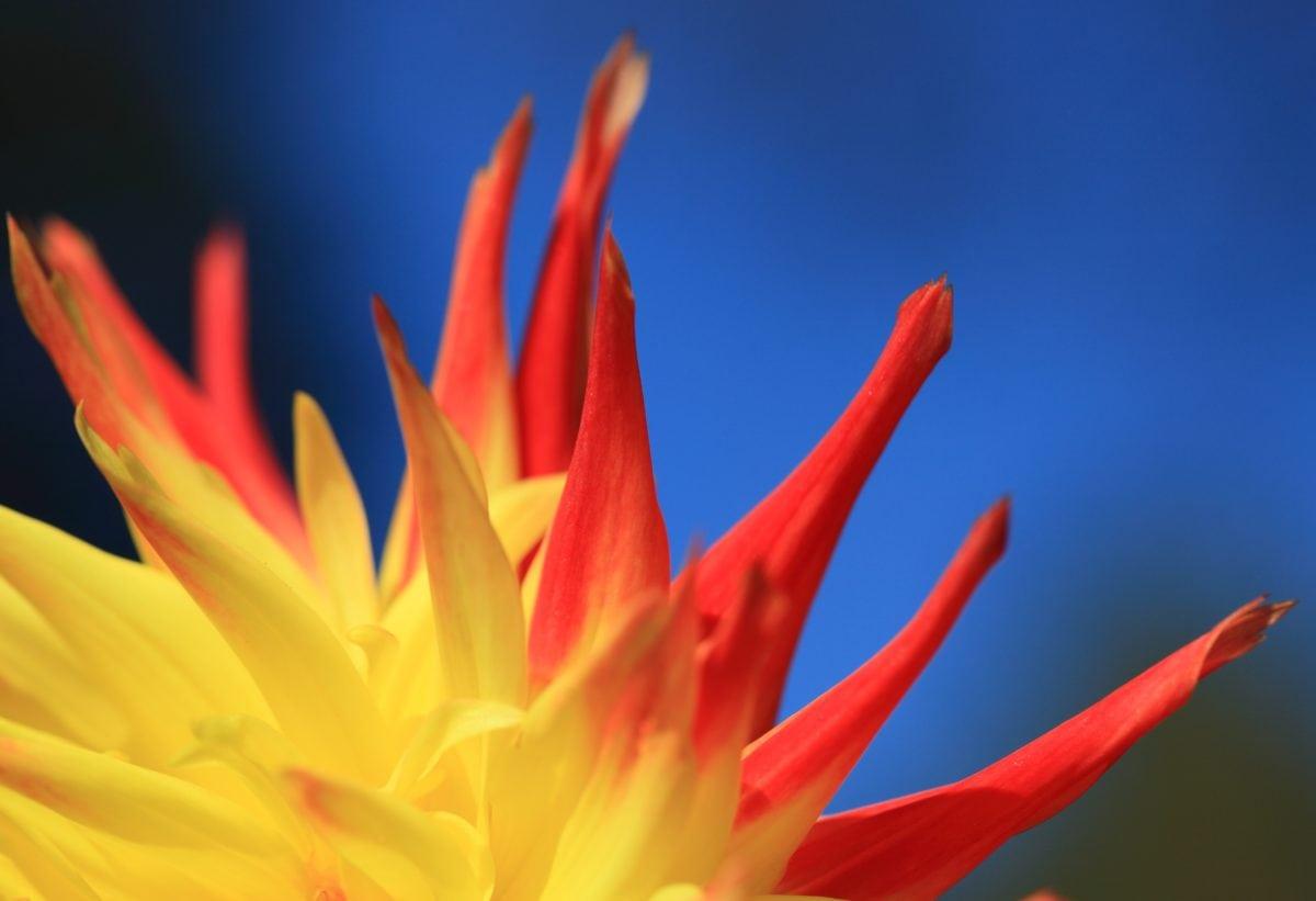 Natura, egzotyczny kwiat, roślina, Płatek, kwiat, ogród