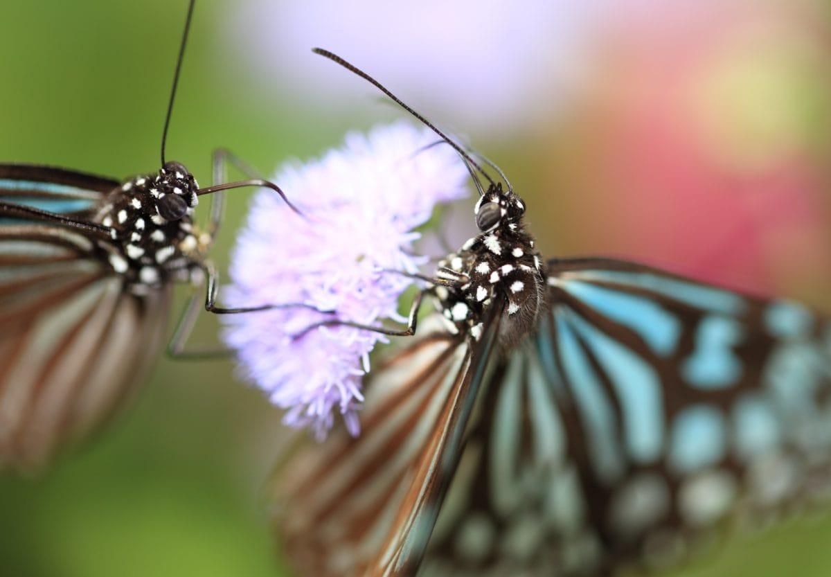 pillangó, nyár, biológia, rovar, állat, természet, moly, vadvilág