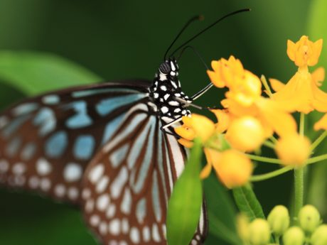 invertebrate, butterfly, wildlife, insect, nature, leaf, yellow flower