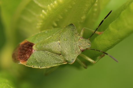 green beetle, leaf, invertebrate, insect, wildlife, nature, plant, animal