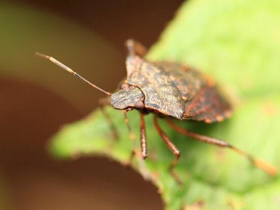 invertébré, insecte, faune, nature, insecte, animal
