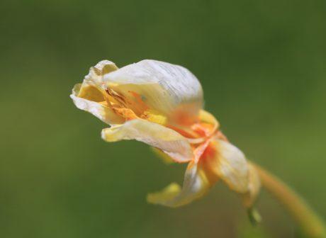 natur, sommer, urt, plante, blomst, blad, organisme