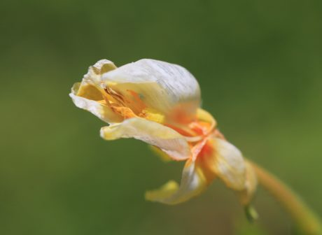 Natur, Sommer, Blume, Blatt, Kraut, Pflanze, Organismus