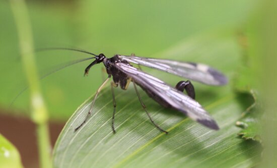 Tierwelt, Natur, Tier, exotisches Insekt, Arthropod, Metamorphose, Bug