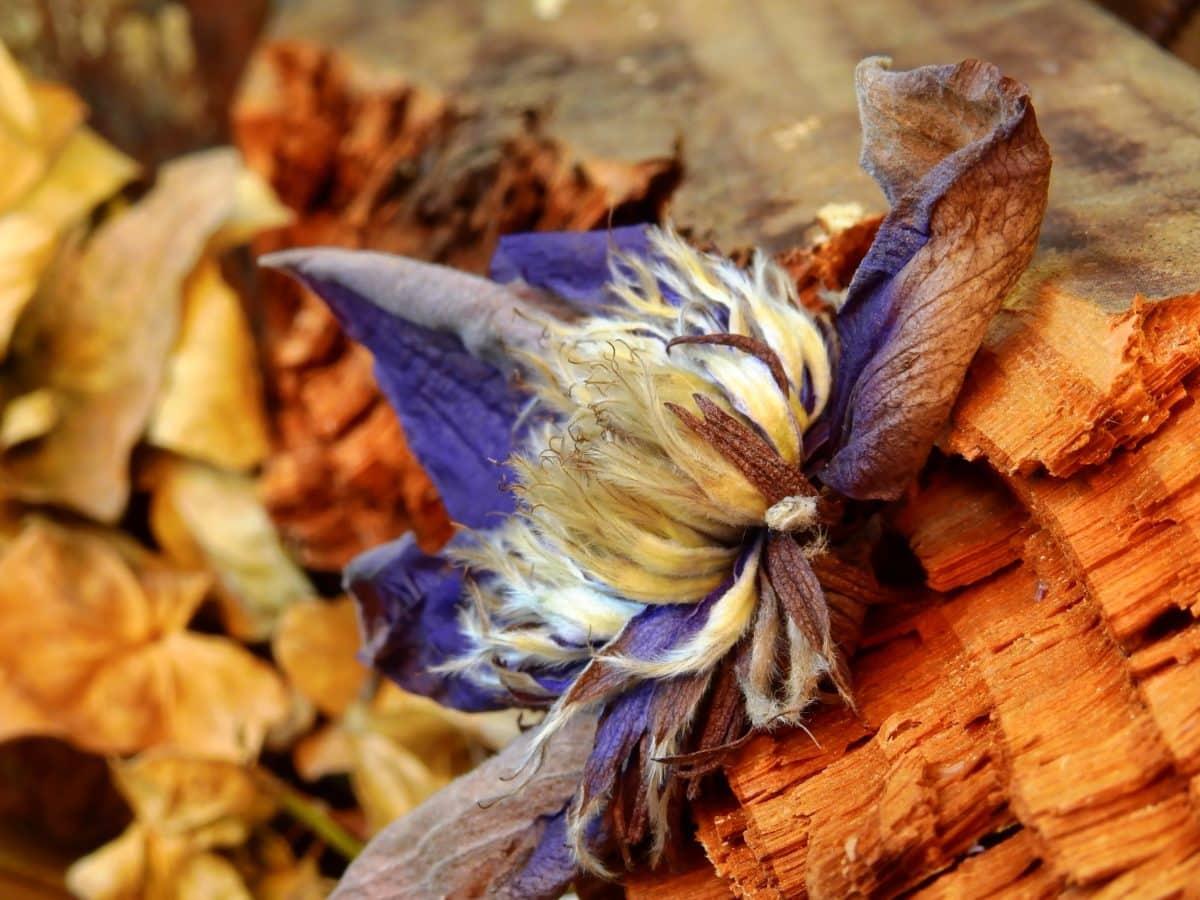 wood, food, nature, dry flower, decoration