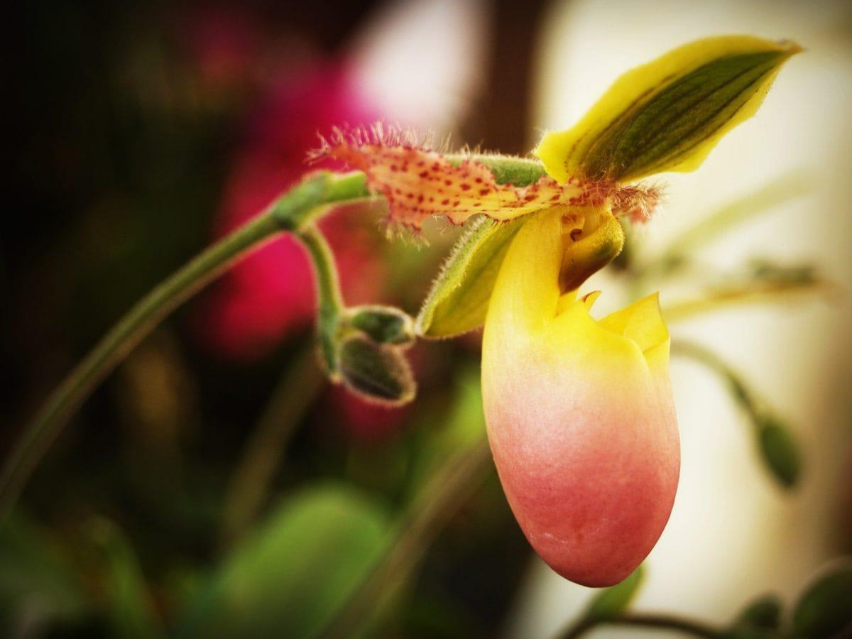 wild orchid, leaf, garden, exotic flower, nature, plant