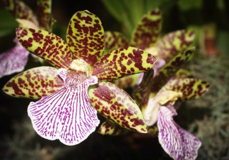 colorful orchid, pollen, flower, nature, garden, exotic flower, plant