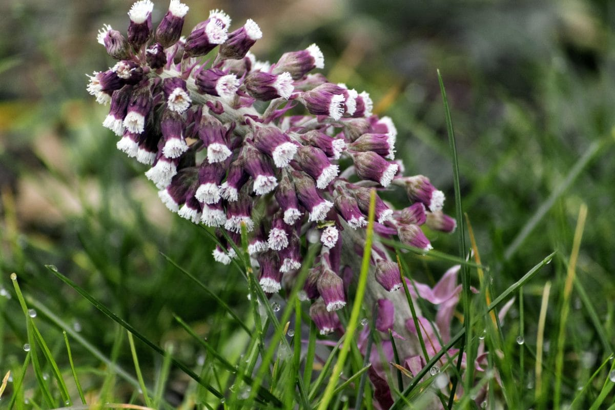kukka, vihreä ruoho, luonto, Puutarha, kenttä, kesä, leikkovihreä, yrtti, kasvi