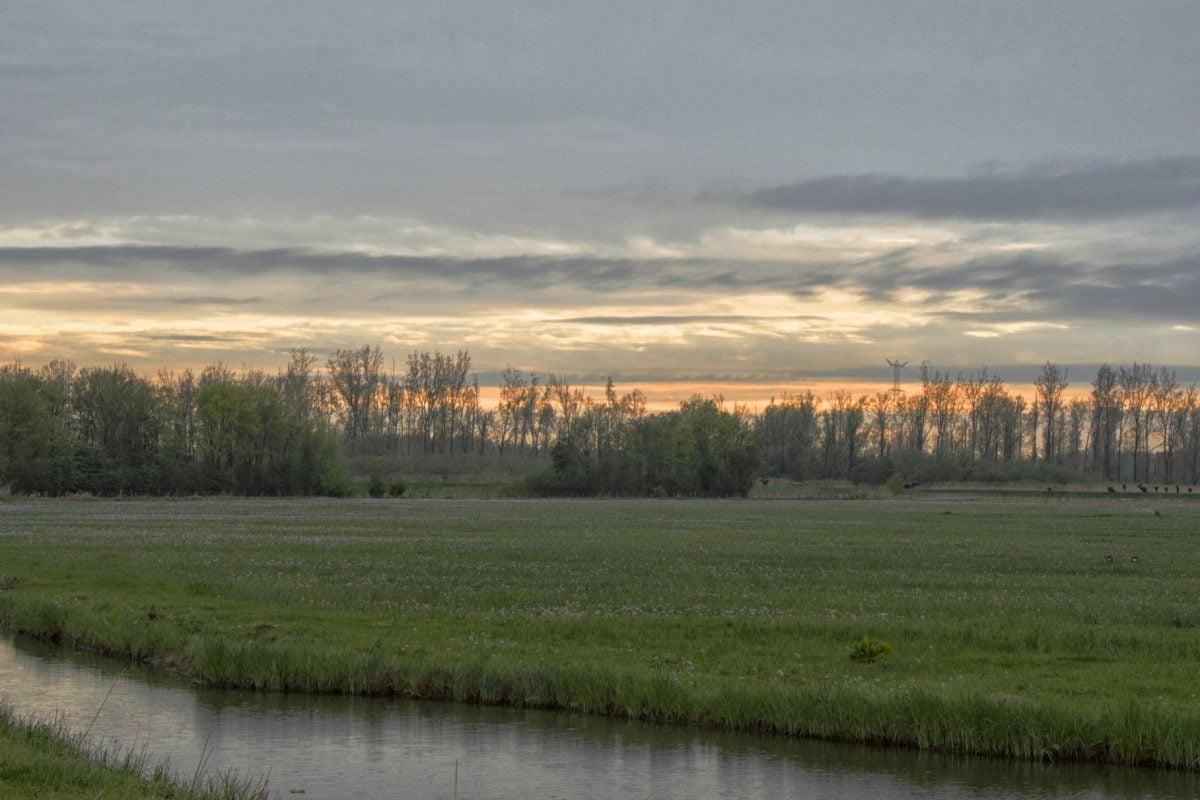 lanskap, air, alam, rawa, lahan basah, tanah, langit, rumput