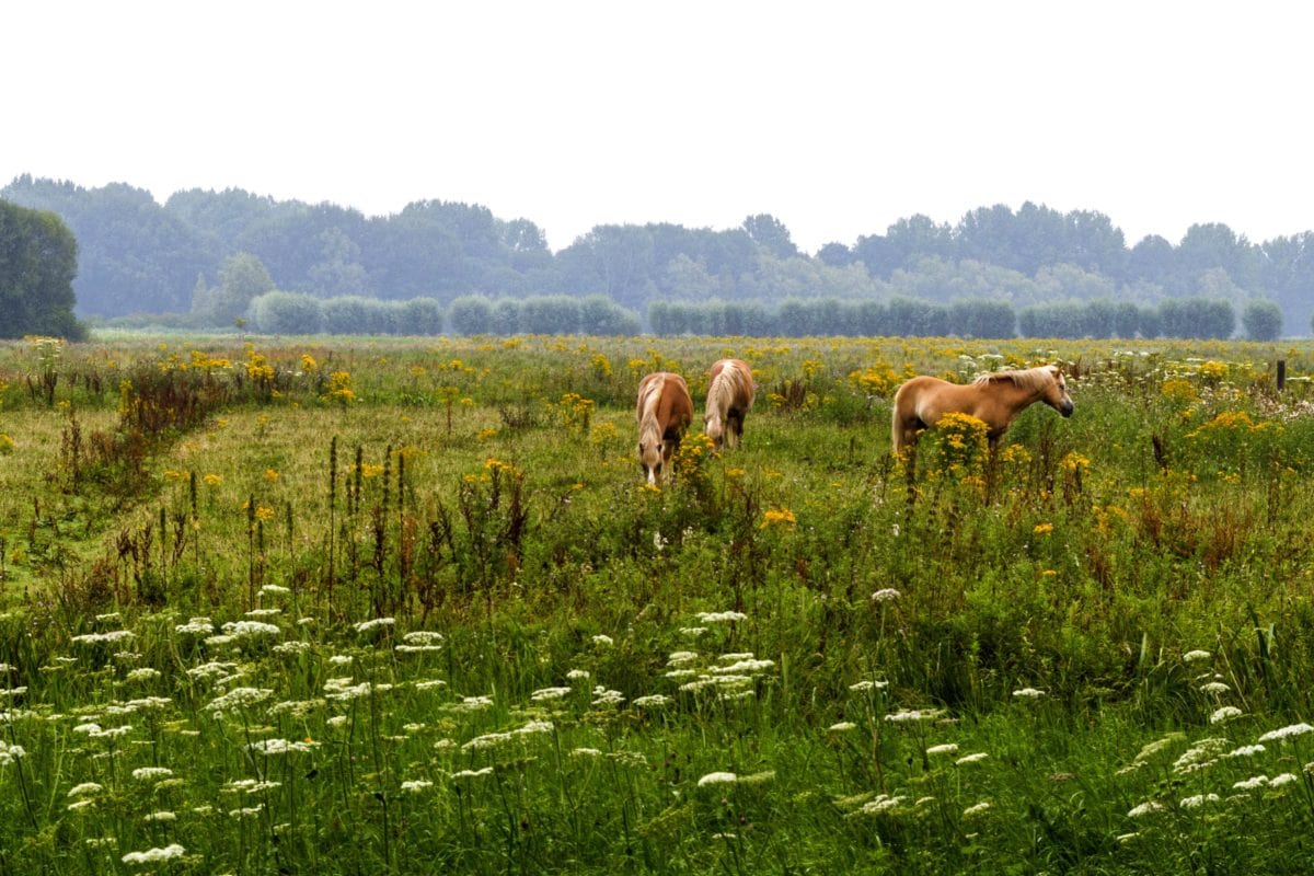 horse, nature, grass, field, landscape, meadow, agriculture, summer