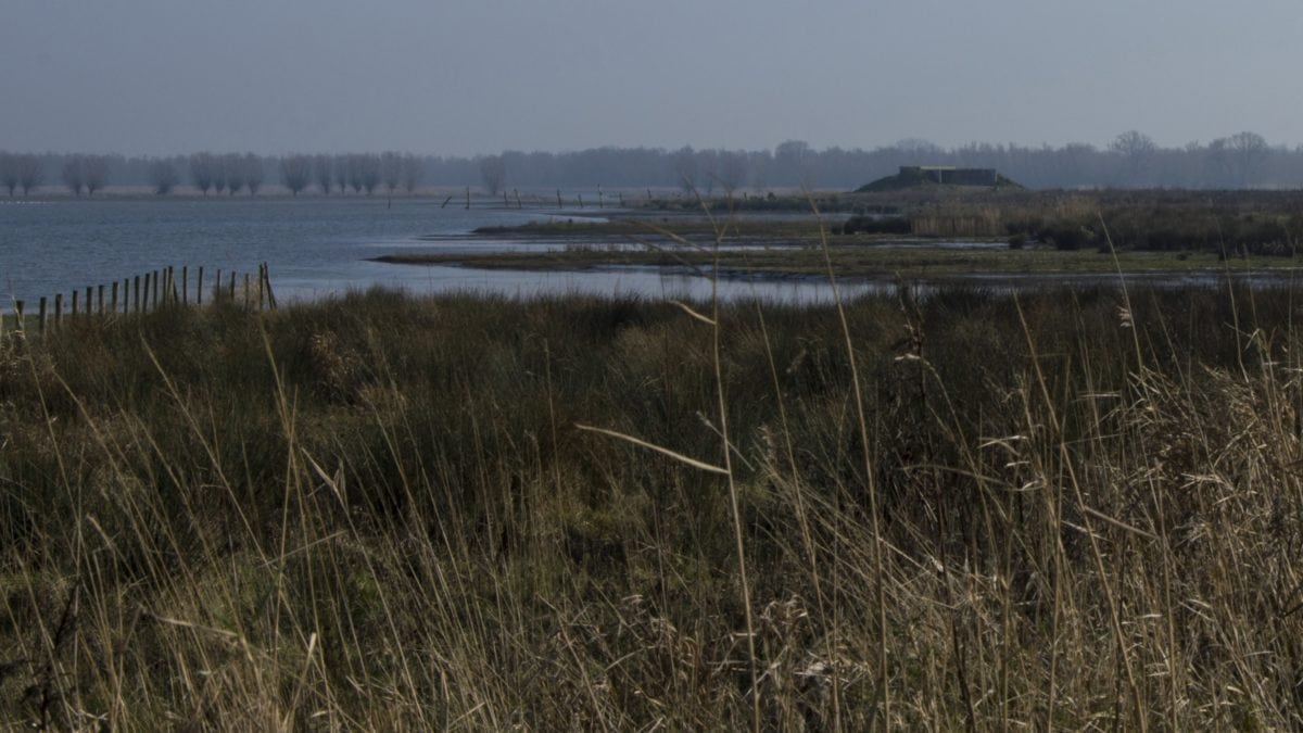 marsh, river, water, reflection, landscape, lake, reed, herb