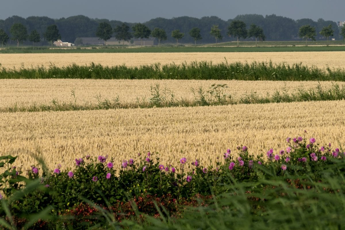 field, landscape, countryside, summer, nature, agriculture