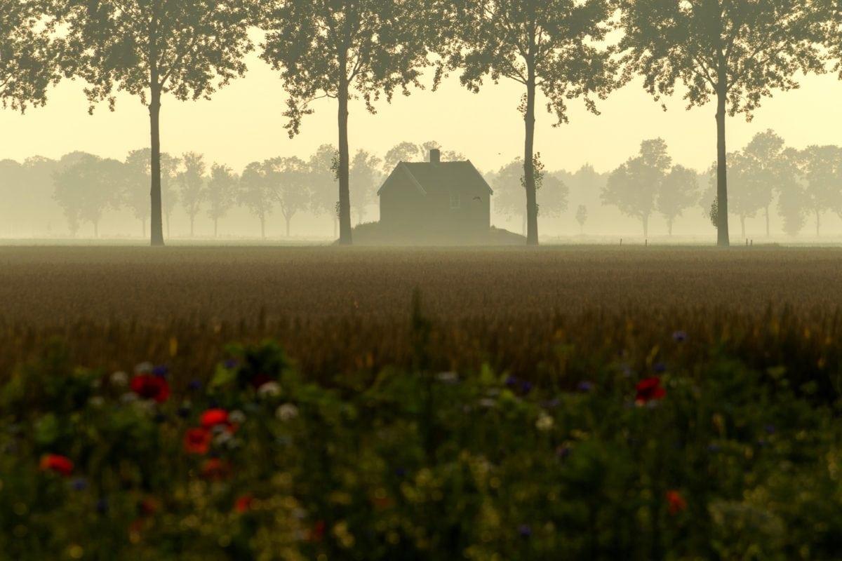 tree, agriculture, landscape, fog, sky, outdoor, dusk, mist